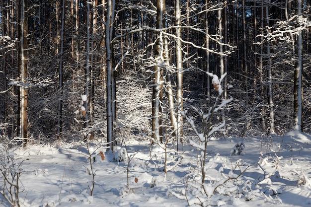 Bomen bedekt met witte sneeuw