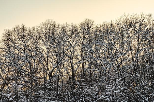 Bomen bedekt met witte vorst