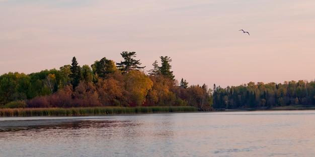 Bomen bij de oever van het meer en de zeemeeuw bij meer van het hout, ontario, canada