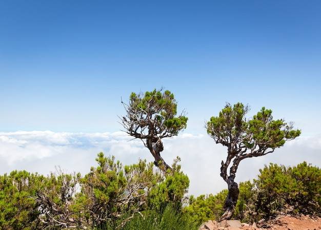 Bomen boven de wolken