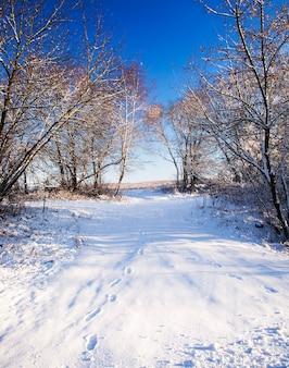 Bomen die in het winterseizoen in het bos groeien
