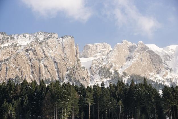 Bomen en besneeuwde bergen in de verte overdag