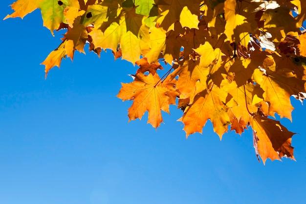 Bomen en gebladerte in de herfst, de locatie - een park,