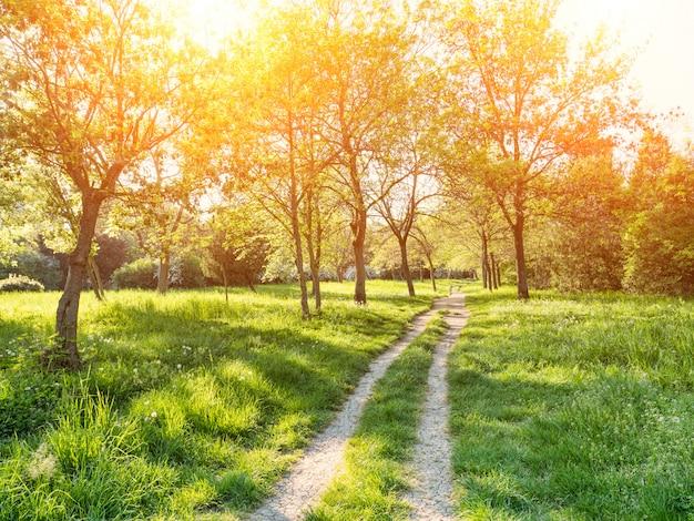 Bomen en gras in achtertuin bij zonnige dag