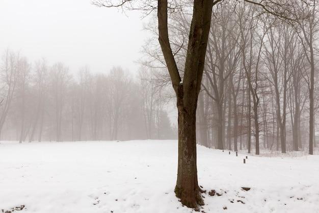 Bomen en koud winterweer na de sneeuwval, diepe sneeuwstormen en bomen na de laatste sneeuwval
