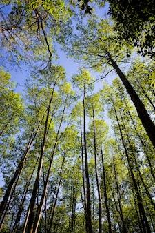 Bomen en planten bij zonnig helder weer, zomer- of lentetijd in het park of in het bos