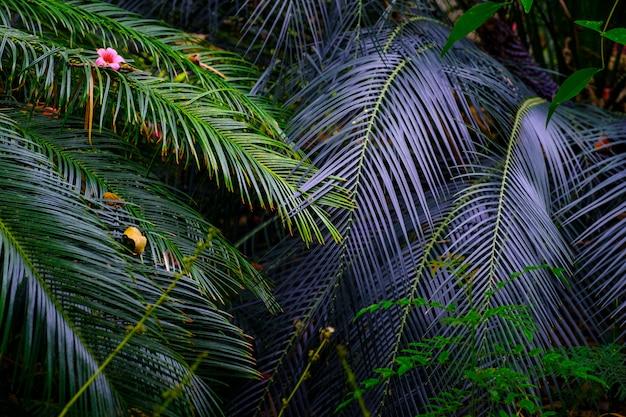 Bomen en planten in de botanische tuin. dichte groene vegetatie in de botanische tuin. tenerife. spanje.