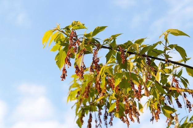 Bomen en planten op de achtergrond van de blauwe hemel in het zonnige zonnige weer