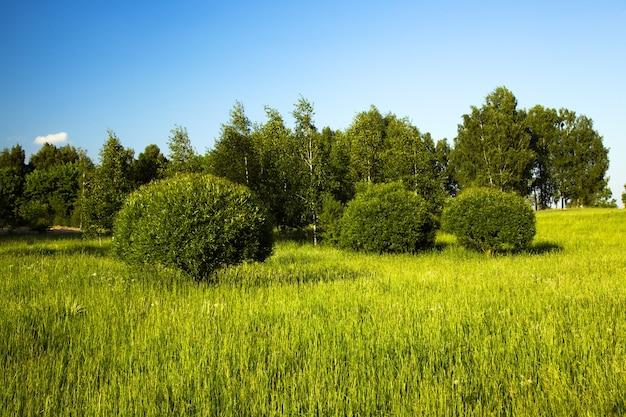 Bomen en struiken die in het voorjaar in een stadspark groeien
