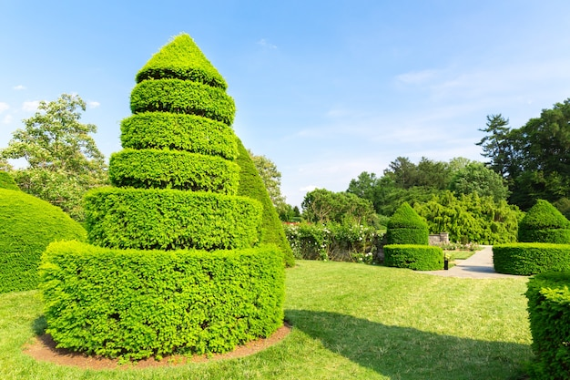 Bomen gesnoeid in de vorm van piramides
