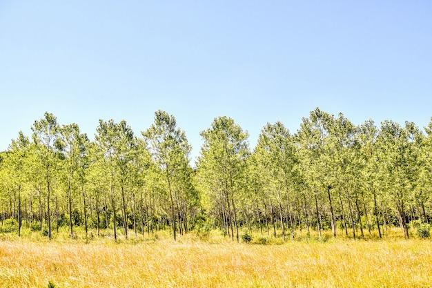 Bomen groeien in de vallei onder de heldere zonnige hemel