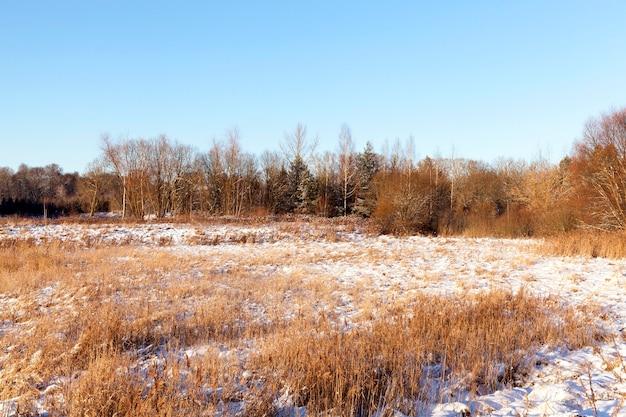 Bomen groeien in een bos in de winter, op de grond is wit sneeuw zonnig weer