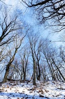 Bomen groeien in een bos in de winter. op de grond ligt witte sneeuw. fotoclose-up bij zonnig weer