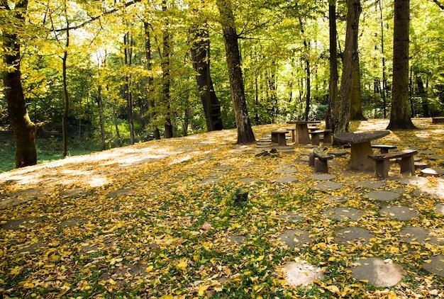 Bomen groeien in een park in de herfst van het jaar