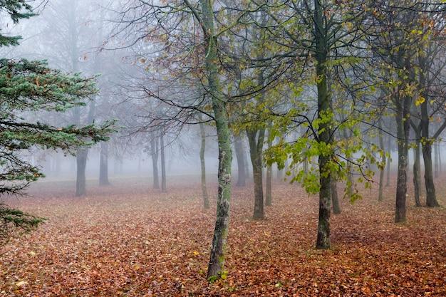 Bomen groeien in het bos en gefotografeerd in het herfstseizoen. ochtend, mist in het park