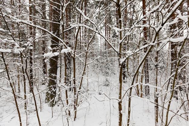 Bomen groeien in het bos en park in het winterseizoen. alles is bedekt met sneeuw. ijzige bewolkte dag