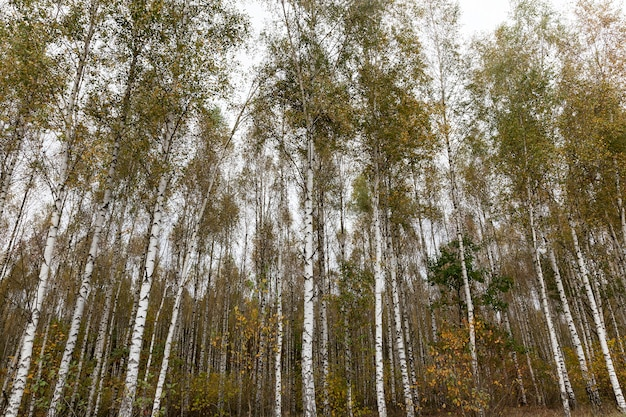 Bomen groeien in het park in de herfstseizoen. sombere eentonige bossen