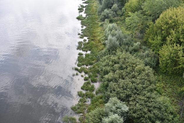 Bomen groeien op de oever van de rivier