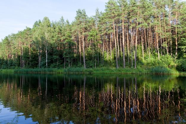 Bomen groeien op de oever van het bos weerspiegeld in het water van een donkere rivier