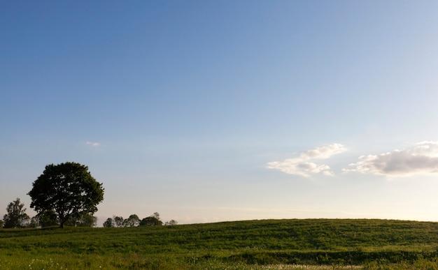 Bomen groeien op een heuvel op een zomers landschap in groen gras, blauwe lucht