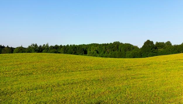 Bomen groeien op een heuvelbos op een zomerlandschap in groen gras, blauwe lucht
