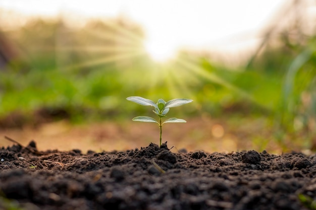 Bomen groeien van nature op grond van goede kwaliteit, concept van het planten van bomen, kwaliteit en duurzaam bosherstel.