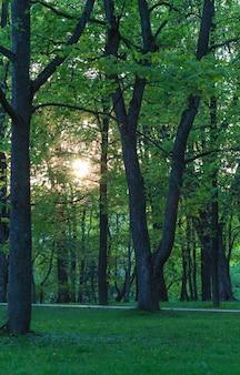 Bomen in de avond