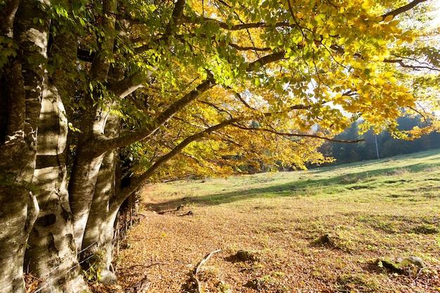 Bomen in de herfstseizoen