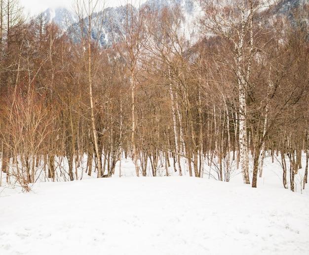 Bomen in de met sneeuw bedekte valleien in de winter