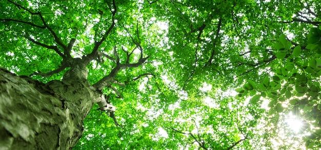 Bomen in de natuur doorkruist door zonnestralen