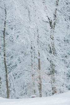Bomen in de sneeuw. mooie winter. winter bos.