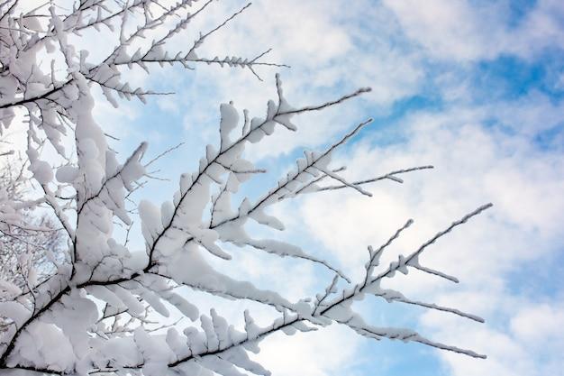 Bomen in de sneeuw tegen de blauwe lucht
