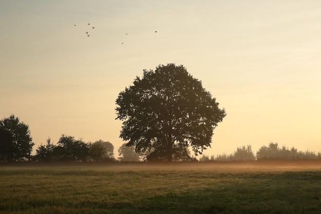 Bomen in de wei op een mistige ochtend