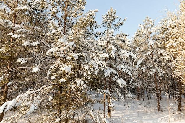 Bomen in de winter Premium Foto