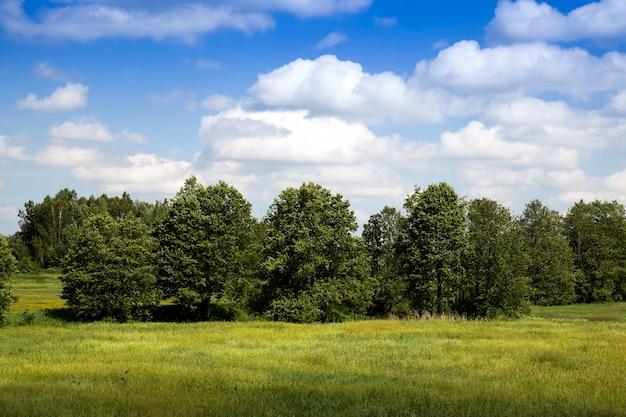 Bomen in de zomer