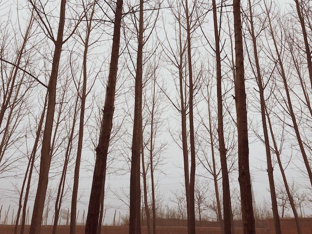 Bomen in een winterbos op een mistige dag