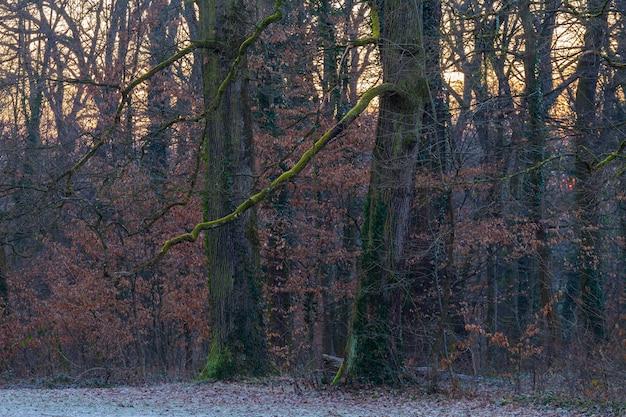 Bomen in het bos, bedekt met groen mos in maksimir park in zagreb, kroatië