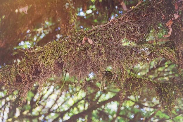 Bomen in het bos hebben mossen en varens langs de stam.