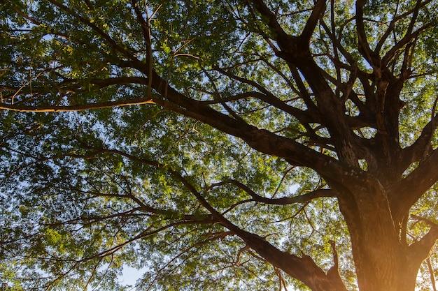 Bomen in het park in de zomer