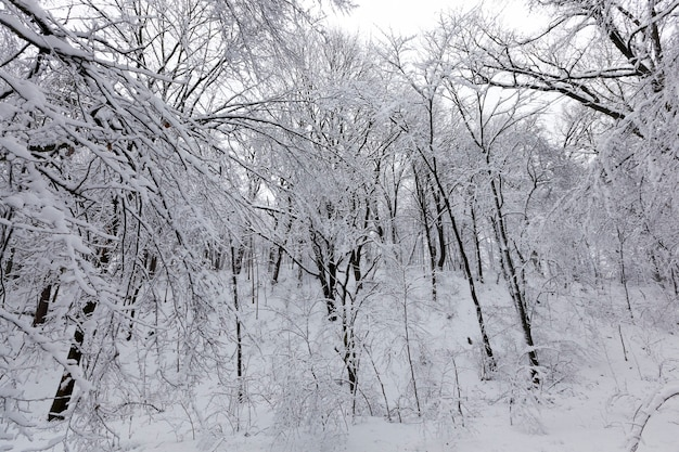 Bomen in het park zijn bedekt met sneeuw, er kunnen sporen van mensen op de sneeuw zijn