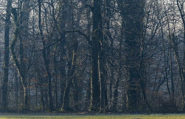 Bomen in het sombere bos in maksimir, zagreb, kroatië