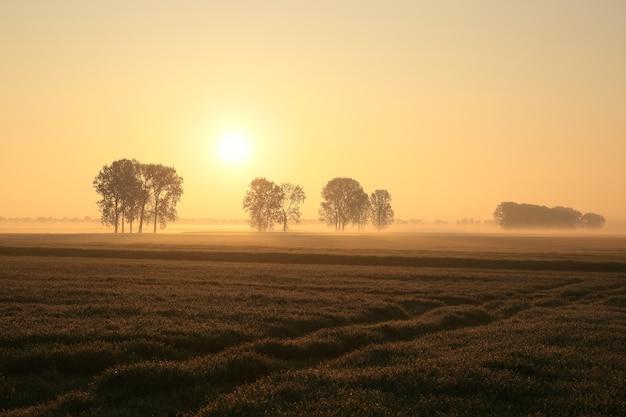 Bomen in het veld op een mistige lentemorgen