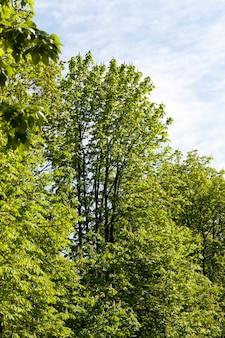 Bomen in het voorjaar