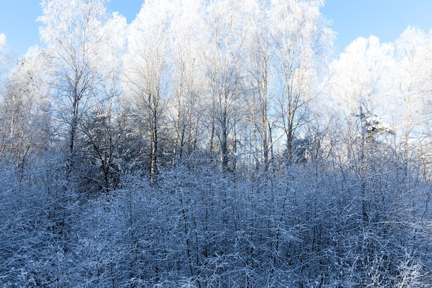 Bomen in het winterseizoen