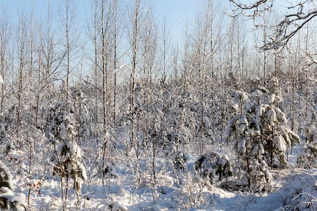 Bomen in het winterseizoen Premium Foto