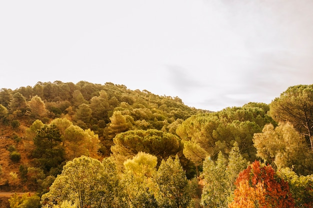 Bomen in heuvelachtig landschap