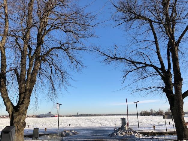 Bomen in sneeuwlandschap