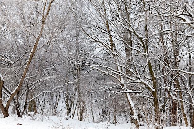 Bomen in winterlandschap