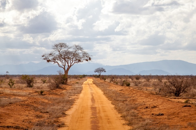 Bomen langs de weg, landschap van kenia, met heuvels in de verte