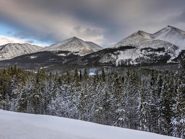 Bomen met berg op de achtergrond, alaska highway, northern rockies regional municipality, briti